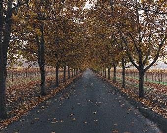 Fall Landscape Photograph, Fall Decor, Landscape Photography, Autumn Decor, Tree Picture, Holiday Decor, Fall Leaves, Fine Art Photography