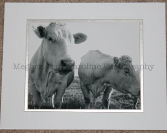 French Cows (matted photo)