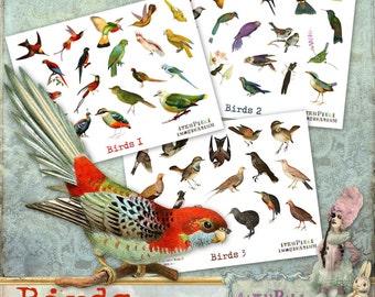 Birds - 3 x Digital Collage Sheet ATC .png - itKuPiLLi - Printable, Instant download