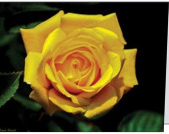 yellow rose - yellow - rose - 4 x 5 notecard