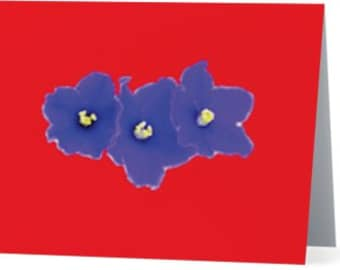 red - african violets - purple - purple african violets - 5 x 7 greeting card - blank card