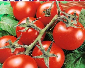 50+ ORGANIC Moneymaker Tomato Seeds Heirloom NON-GMO Heavy-Yielding