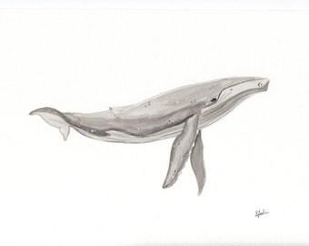Humpback Whale Watercolour Print