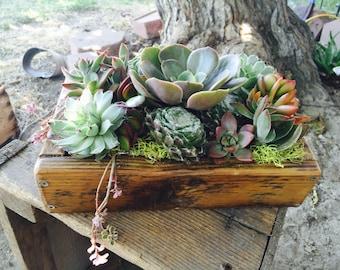 Succulent garden arrangement in barnwood planter, loaded with succulents. Wedding Centerpiece-. drought tolerant live plants