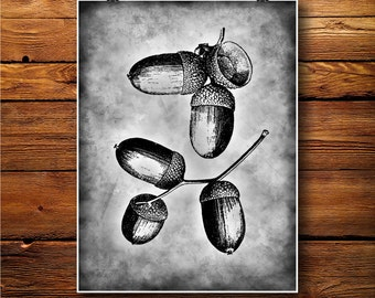 Nuts Print, Botanical Art Decor, Nature Illustration, Vintage Paper  BW423