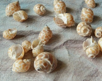 Craft Shells, Patterned Shells, Jewelry Charms, Beach Wedding Decorations, Nautical Decor, Seashells