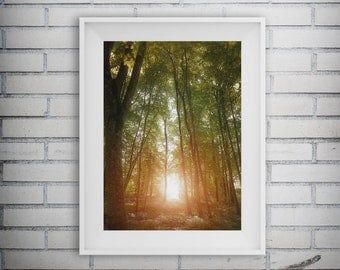 Forest Art, Nature Print, Forest Print, Autumn Decor, Fall Decor, Forest Photography, Woodland Art Print, Printable Art, Digital Download