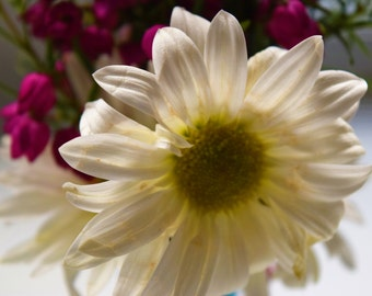 White Daisy Two