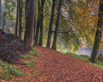 Autumn on The River Teffi, Wales, Fine Art Print