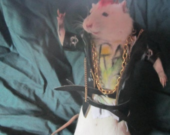rat taxidermy taxidermy rat punk punk cabinet of curiosity oditties