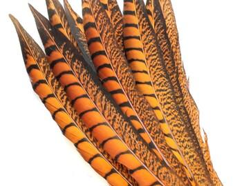 11-13 Inch Orange Lady Amherst Feathers (5) Orange Pheasant Feathers. Orange Colored Feathers for Mask. Pheasant Tail Feather. Mask Feathers