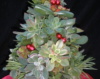 Christmas tree, succulent, topiary, corporate gift, arrangement, hostess gift, holiday