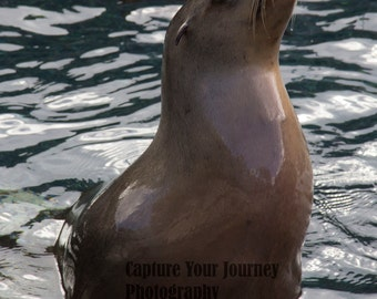 Proud Sea lion