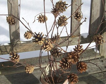 Pine Cone Branches.  Birch branches with Scots Pine (Scotch) Cones.  Winter decor, Christmas, floral arrangement, pinecones, center piece.