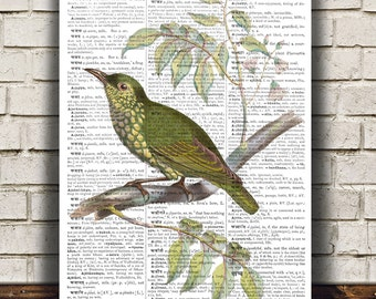 Bird print Asity poster Animal art Ornithology print RTA660