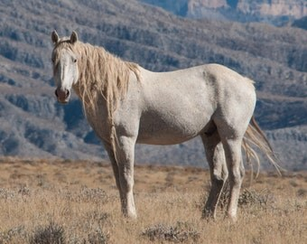 Horse Photography, Wild Horses, Wild Mustang, wildlife, horses, Large wall art print, Colorado