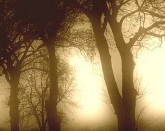 Trees In Sepia At Meerbrook
