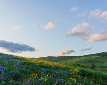 Spring Wildflower Photography, Winthrop Farm Field, Rustic Country Landscape, Rolling Hills Picture, Blue Skies Summer, Fine Art Photography