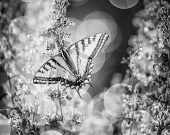 Black and White Butterfly Photo, Butterfly on Flowers, Butterfly Wall Art, Black and White Flowers, Bokeh Backdrop, Nature Photography,