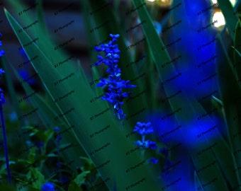 Nature's Bluez Print