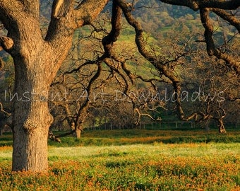 Tehachapi, California, landscape photography print,  large wall art,  sunset, fine art photography, stock photography,