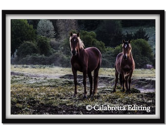 Wild Horses. Fine art photography. Wild horses. Printed on photo paper or artistic canvas.