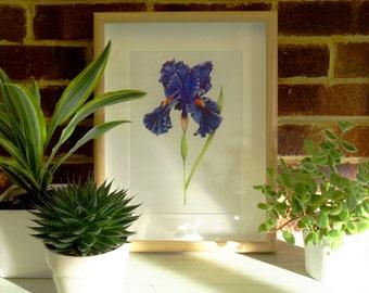 A4 Iris Art Print