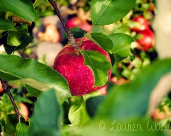 A Tempting Apple- Photo Print