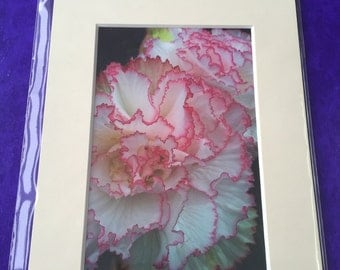 Pretty In Pink Flower Photo in a Mounted Frame