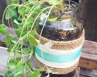 Grow Your Own Cat Nip Garden