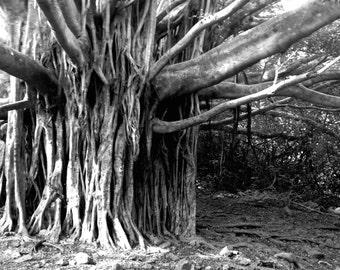 Large Tree Print B&W