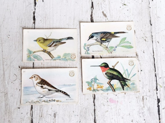 Set of 4 Vintage Arm and Hammer Bird Cards