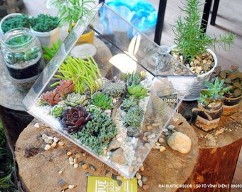 Succulent Terrarium in Geometrical Planter