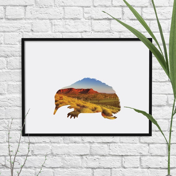 Large Echidna Print Wall Art Animal Room Decor Australian