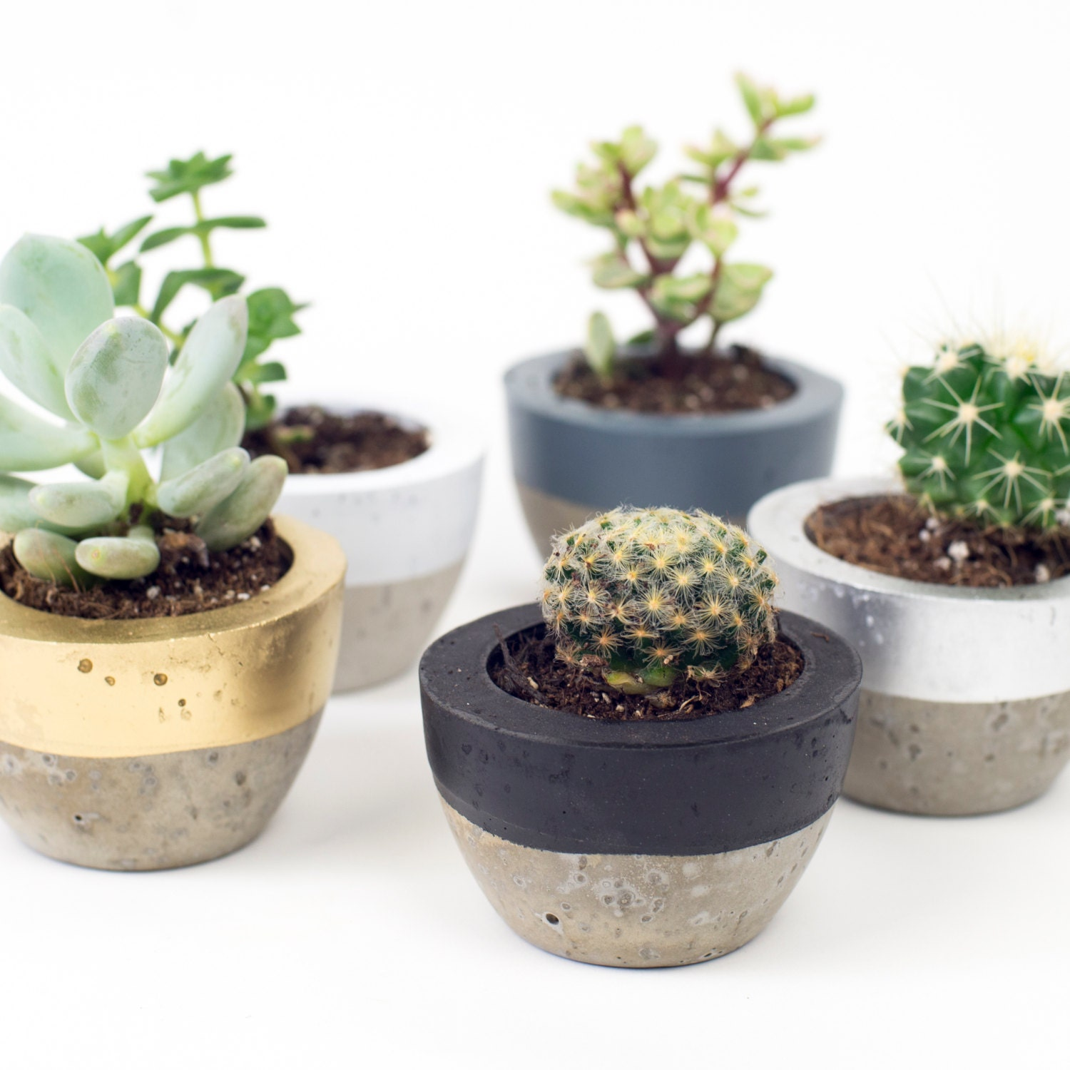 Mini Concrete Planters : Concrete pot colour block planter plant