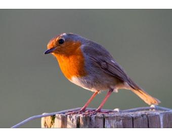 robin greeting card - bird card - blank card - blank greeting card - nature card - photo robin card - UK wildlife - card for bird lovers