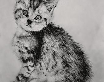 Cautious Kitten Charcoal Drawing - Original Glycee Print