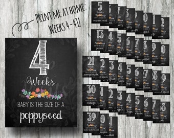 Printable Weekly Pregnancy Signs- Weeks 4-41 Chalkboard Countdown Prints- Instant Download Photo Props