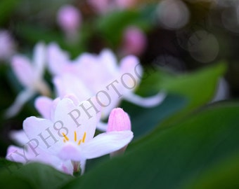 Spring Blossom - Photography Print, Flower Photography, Colour Photography