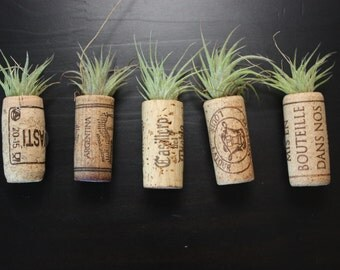 Air Plant Cork Magnet