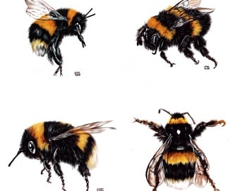Beautiful Bumblebees