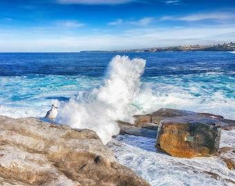 The Rock Seagul Bondi Beach Australia