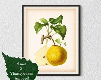 Fruit print, Pear art, Kitchen art, Pear print, Antique botanical print, Print vintage, Instant download print, Home wall art, Fruit art #45