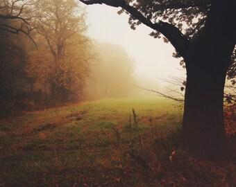 Golden Autumnal tones digital download picture set