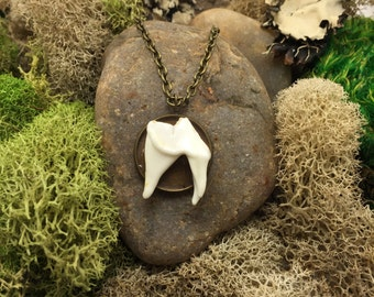 Coyote tooth necklace pendant taxidermy jewelry