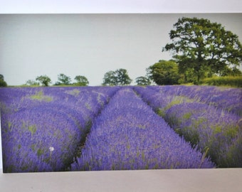 Postcard, Lavender field
