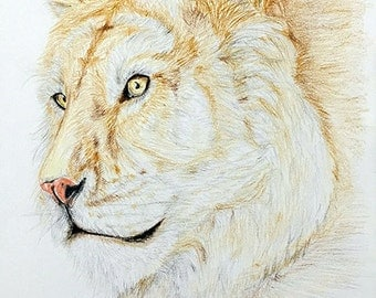 Golden Tiger Hand Drawing Print - golden tiger art print, colored pencil tiger drawing, detail drawing