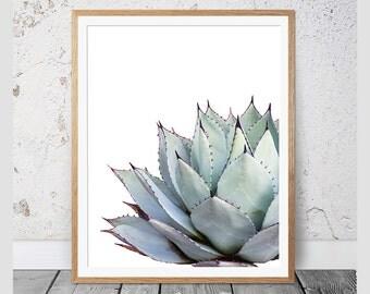Cactus Print, Succulent Print, Cacti Print, Cactus, Botanical Print, Cactus Art, Coastal, Wall Art, Poster, Prints, Cactus Photography, #108