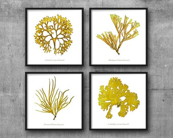 Coral Prints, Coral Print, Sea Coral, Set Of 4, Wall Art, Prints, Seaweed Prints, Marine Art, Coral Art, Coral and Seaweed, Yellow Art, 115a