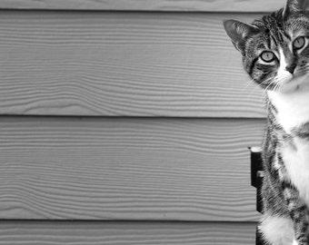 The lovely neighbor Cat. Original fine art photograph.